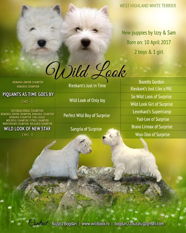 Westie Puppies Litter G